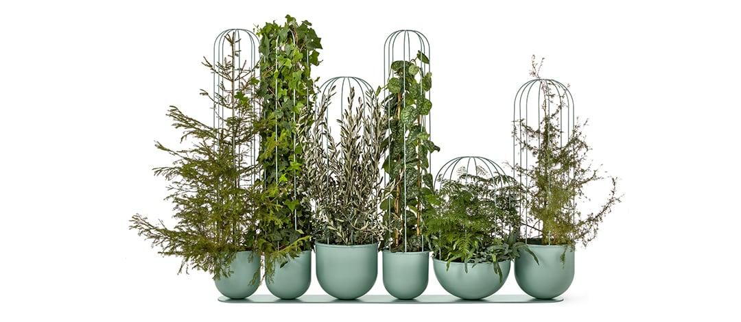 Cacti by Anki Gneib - Nola
